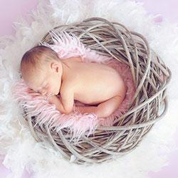 baby-nid